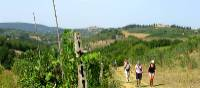 On the Via Francigena, San Gimignano in the distance