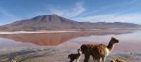 Laguna Colorada | Michel Noel