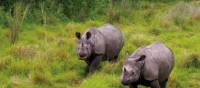 Viewing the majestic Asiatic Rhino's in their natural habitats | Zac Kostos