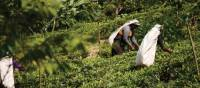Local workers at a tea plantation in Sri Lanka | Charles Duncombe