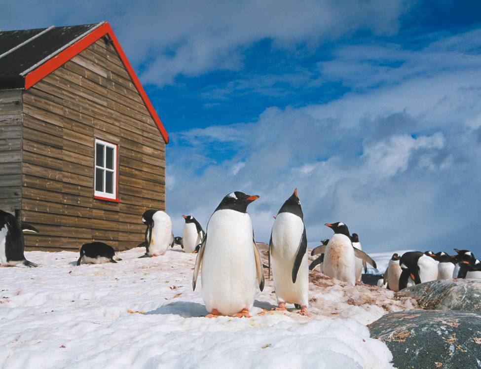 Prolific wildlife and amazing history can both be discovered in the Antarctic Peninsula |  <i>Sue Werner</i>