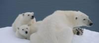 Polar Bears in Spitsbergen   Elaine Clueit