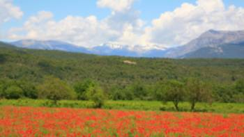Poppies near Ainsa