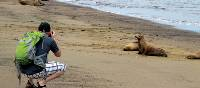Photographing the Galapagos fur seals on the beach | Kate Harper