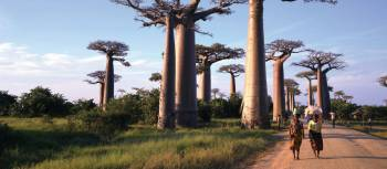 Walking amongst baobab trees in Madagascar | Gesine Cheung