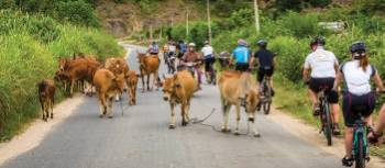 Cycling in Vietnam | Richard I'Anson