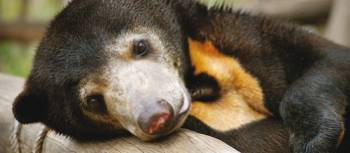 Join a Free the Bears trip to help little guys like this one
