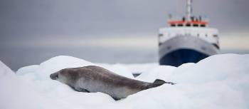 MV Ushuaia and Crabeater Seal | Alex Cearns Houndstooth Studio